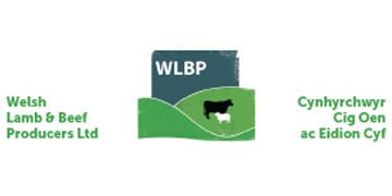Welsh Lamb and Beef Producers Ltd logo